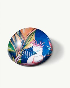 Tropical Macaw Paperweight